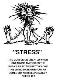 animal stress